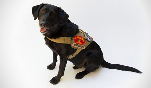Military Working Dog and Contract Working Dog Adoptions