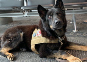 Mission K9 Rescue Past and Present