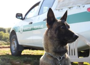Mine Detection Dogs serving in Bosnia need transport help!